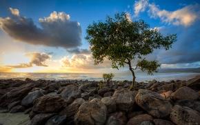 Картинка море, дерево, облака, небо, камни, закат