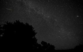 Картинка космос, звезды, деревья, ночь, силуэт