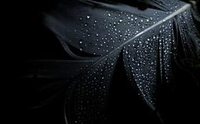 Обои минимализм, перо, чёрный, фон, капли
