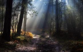 Картинка осень, лес, свет, природа