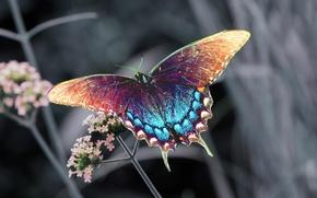 Картинка цветок, бабочка, насекомое