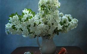 Картинка белый, ракушка, ваза, кувшин, спирея, таволга