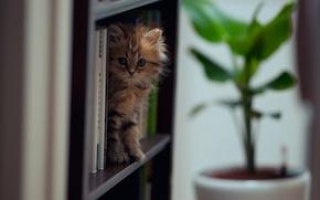 Обои кошка, © Ben Torode, книги, Daisy