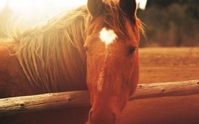 Картинка животные, лошадь, забор, деревянный, animals, fence, wooden, horse, солнечный свет, sunlight