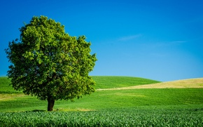 Обои лето, небо, трава, дерево, поля, горизонт, зеленое