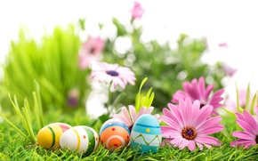 Картинка цветы, весна, пасха, flowers, Easter, eggs