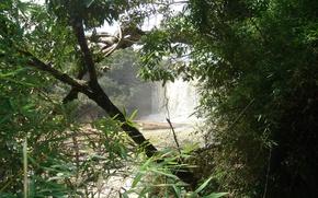 Картинка лес, вода, деревья, водопад, джунгли