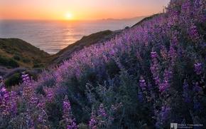 Картинка море, небо, закат, цветы, даль, дымка, photographer, Kenji Yamamura