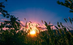 Картинка Закат, Природа, Трава, Nature, Grass, Sunset