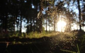 Картинка солнце, жизнь, тень, семена