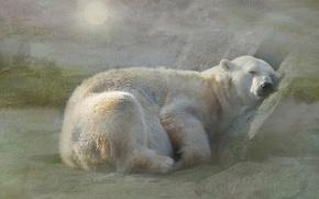 Картинка медведь, отдых, снег, текстура, белый, полярный, сон