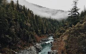 Картинка лес, деревья, туман, ручей, камни
