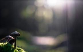 Картинка grass, sunshine, nature, photo, macro, bokeh, sunlight, plants, web, closeup, Mushrooms, ray of light