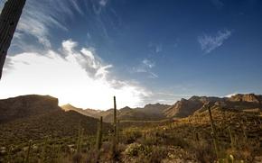 Картинка горы, кактус, каньон, США, arizona, sabino canyon