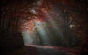 Картинка дорога, осень, лес, лучи света