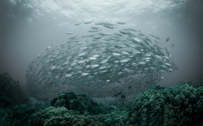 Картинка океан, море, рыбы, стая