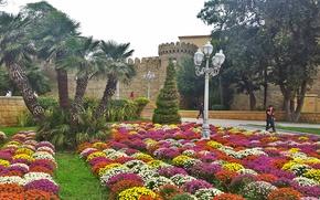 Картинка цветы, природа, красиво, Баку