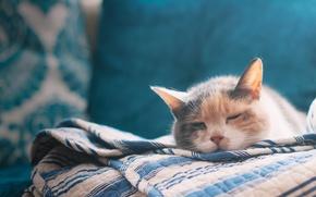 Картинка кошка, кровать, простыня, cat, bed, sleeping, bed sheet, спальный