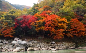 Картинка осень, лес, деревья, река, камни, красота
