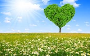 Картинка поле, дерево, сердце, ромашки, весна, луг, love, sunshine, field, heart, tree, spring, meadow