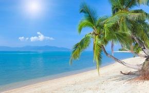 Обои океан, пальмы, пляж, песок