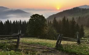 Картинка цветы, горы, Украина, ограждение, солнце, Україна, Ukraine, лес, облака, Карпати, природа, туман, деревья, небо, трава, ...