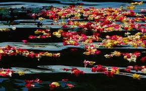 Картинка вода, краски, Калифорния, США, лепестки роз, Oceanside Harbor