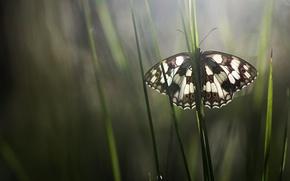 Картинка трава, макро, бабочка, насекомое, обои от lolita777
