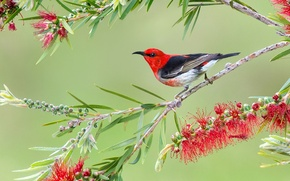 Картинка цветы, птица, ветка, нектарница