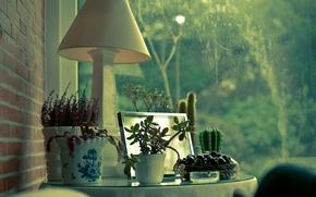 Картинка дом, окна, лампа, растения, кактус