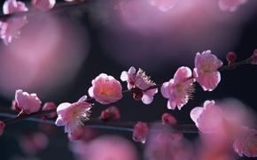Картинка солнце, весна, цветущее дерево