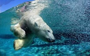Обои медведь, арктика, под водой