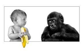 Картинка friendship, gorilla, banana, the person