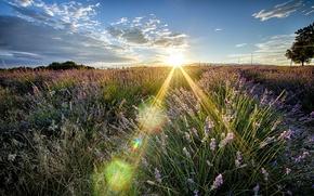 Картинка поле, лето, свет, пейзаж, природа