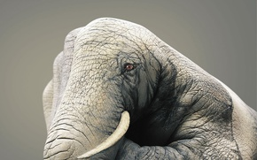 Обои рука, рисунок, Слон
