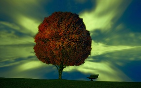 Картинка дерево, скамья, Plant your dream