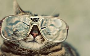 Обои очки, щурится, носик, кот