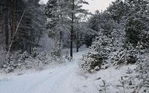 Картинка Зима, Деревья, Снег