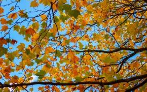 Картинка осень, небо, листья, ветки, дерево