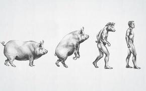 Картинка рисунок, мужчина, эволюция