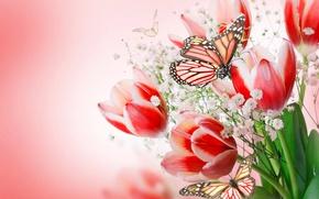 Обои flowers, tulips, flowers and butterflies, flowers, tulips pink