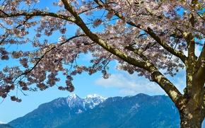 Картинка горы, Весна, цветение, mountains, spring, flowering