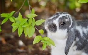 Обои ветка, кролик, листочки