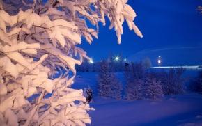 Картинка зима, снег, деревья, ночь, парк