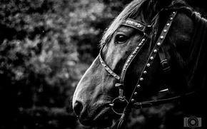 Картинка настроение, лошадь