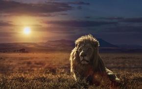 Картинка закат, природа, лев