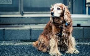 Картинка взгляд, улица, собака