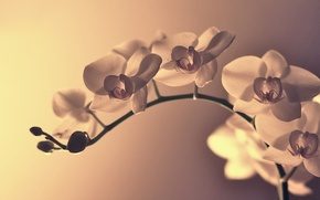 Обои цветы, макро, ветка, лепестки, изгиб, цветок