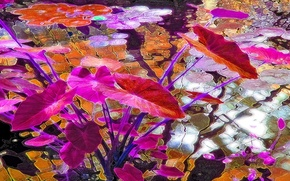 Картинка листья, рендеринг, рисунок, цвет, вектор, водоем