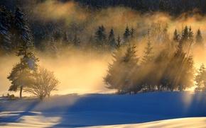 Картинка лес, снег, пейзаж, утро